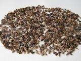 Семена левзеи 3 г (примерно 340 шт) упаковка